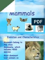 3b Mammalshjhj8yg