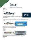 peces peruanos