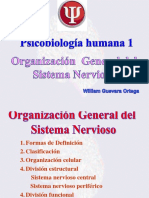 Clase 2 Organización Del SN