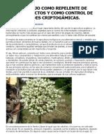 El Uso Del Ajo Como Repelente de Plagas Insectos y Como Control de Enfermedades Criptogámicas. _ Ecomaria