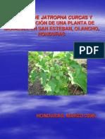 Documento de Proyecto Plantacion de Jatropha Curcas Honduras