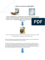 Timeline of the Cause of Extinction of Dodo Birds