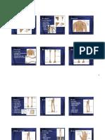 3. Osteología (2 Parte)