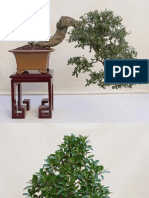 Bonsai photography
