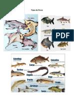Reptiles, Anfibios y Peces