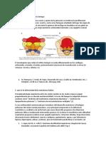 Cuestionario de embrio.docx