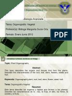 organografia_vegetal.pdf
