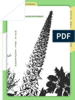 angiospermas_guia_prof.pdf