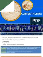 4. Alimentacion.pptx