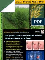 Artemisia Annua La Planta de La Premio Nobel