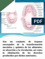 Aparato Digestivo Tubular