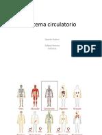 Sistema Circulatorio Quinto Básico