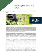 Perú y Narcotráfico Information Valiosa