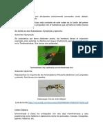 ecologia-part1