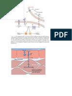 proteina g2.docx
