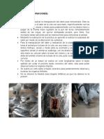 Resultados Organos Linfoides Corregido