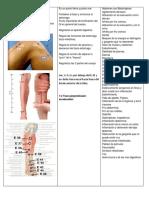 a efectividad clínica de la electroacupuntura en la meralgia parestésica.docx