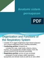 Anatomi Sistem Paru
