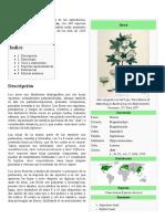 Acer (Planta)