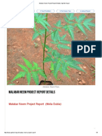 Malabar Neem Project Report Details _ Agrifarming