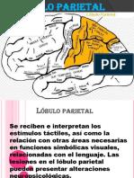 110654500-Exposicion-de-Lobulo-Parietal.pptx