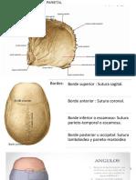 Anatomia Del Hueso Parietal y Lobulo