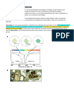 Notas de Mineralogia Optica