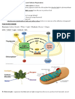 Biotechnology Reviewer - Photosynthesis and Cellular Respiration
