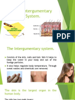 The Intergumentary System