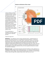 Cornea Structure Layers and Function Web