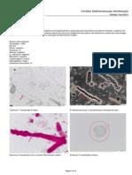Cl Urinalise Identificação 201511 Caso Clinico
