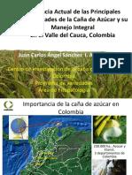 Enfermedades de La Caña de Azúcar en Colombia 2015 Bolivia