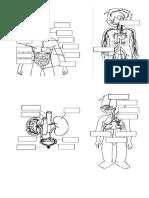 Dibujos Sistemas de Nutrición