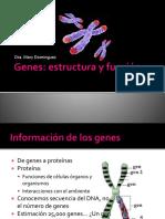 genes-estructura-y-funcion.pptx