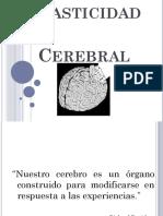 plasticidadcerebral-120531140257-phpapp02