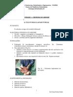 Cirurgias Do Abdome (Celiotomia)