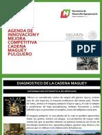 Diagnostico Maguey