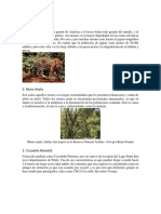 10 Animales en Exticion Guatemala