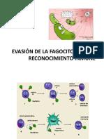 Evasión de La Fagocitosis y Del Reconocimiento Inmune