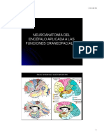 Clase Neuroanatomia Aplicada a La Odontologia