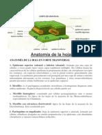 Anatomia de La Hoja