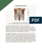 Huesos del tronco 2.docx