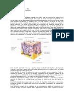 Dermatologia Lesionesprimariasysecundarias 2 [1]