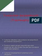 kelompok 4 traceophyta