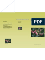 Pashanpalvi Brochure