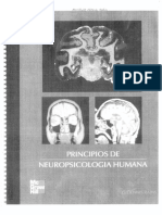Principios de Neuropsicologia Humana Rains