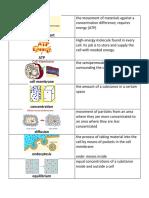 pd 5 cell membrane