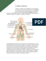 Resumo Anatomia Desorientada