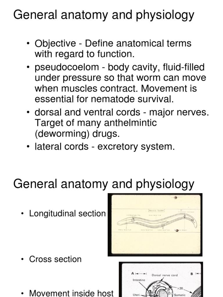 lecture_15.pdf | Veterinary Medicine | Organisms
