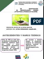 Producción de Biofertilizante Usando Pseudomonas Sp en Frijol Taller 2